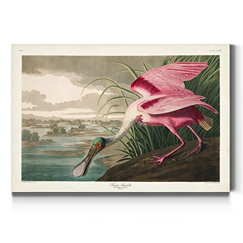 Renditions Gallery Roseate Spoonbill by John James Audubon, Classic Bird Wall Art, Bright and Colorful, Premium Gallery Wrapped Canvas Decor, Ready to Hang, 12 in H x 18 in W, Made in America Print
