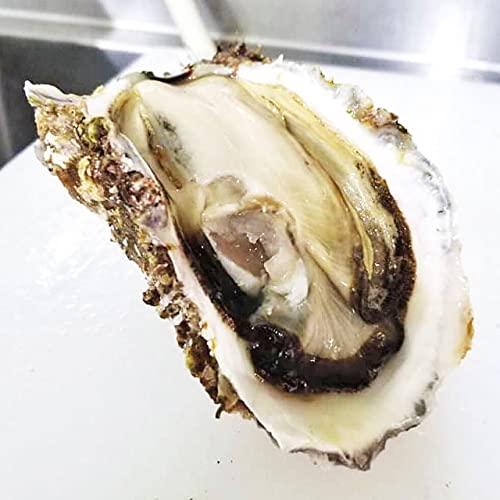 天然岩ガキ 1kg(5~7個) 山形県庄内浜産 岩牡蠣 食の都庄内