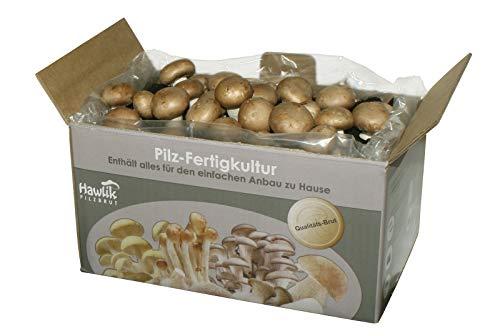 Pilz-Fertigkultur - Steinchampignon - Pilzzucht
