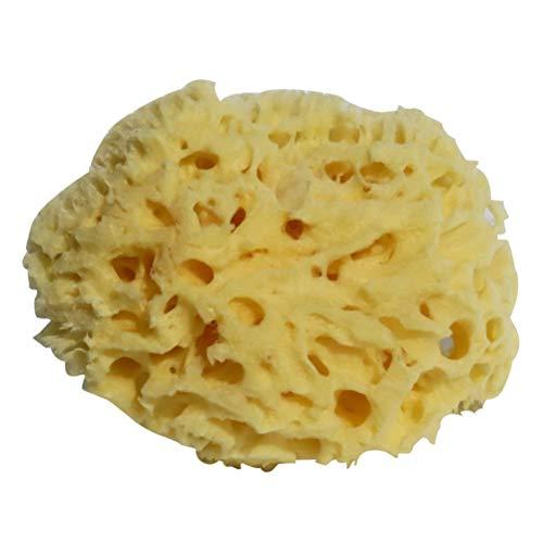 Lurrose 4-4.5 Pouces Éponge Naturelle en Mer Éponge en Nid d'abeille Épurateur de Bain Éponge en Nid d'abeille Accessoires de Baignoire pour Bain Douche Spa