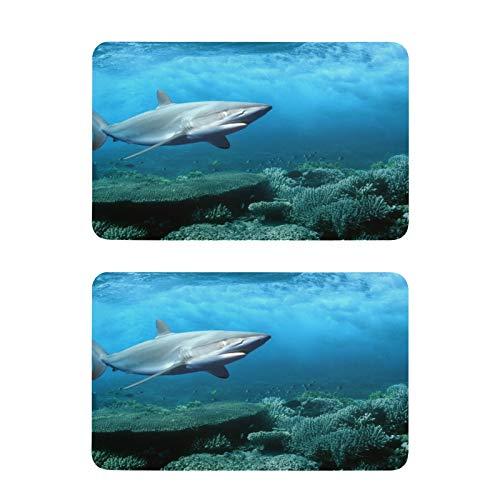 xigua Imanes de nevera de tiburón de mar, imanes cuadrados para cocina, decoración de cocina, 2 unidades