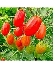 Vista Graines de tomate arc-en-ciel 100pcs / sac, graines de tomate rares, graines de bonsaï et légumes biologiques, plante en pot pour la maison et le jardin