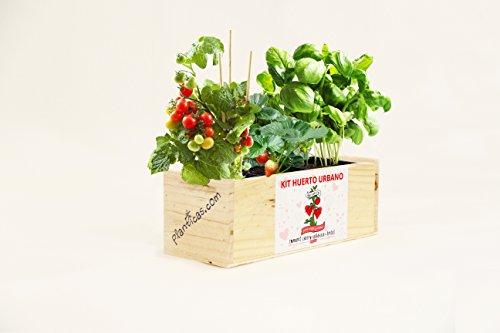 Kit de Huerto Urbano para Enamorados: Tomates Cherry, Albahaca y Fresas