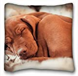 Customize Funny Throw Pillows Covers Cushion Pillowcases Square Animals Hungarian Vizslas Ennio s Dog 18' 18' Two Side for Home,Indoor,Bed,Garden,Car,Office,Sofa Decor