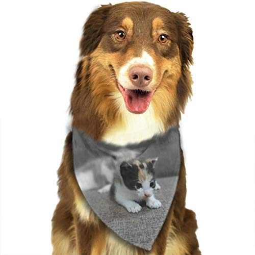 HGFR Tri-Color Kitten On Gray Padded Sofa Customized Dog Headscarf Bright Coloured Scarfs Cute Triangle Bibs Accessories for Pet Dogs