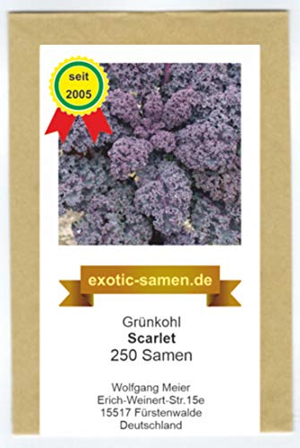Grünkohl, Fiederkohl, Braunkohl - Scarlet - lila Blätter - 250 Samen