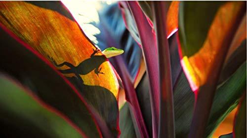 HEE WAG Froschblatt Bild Tier Pflanze Malerei Nach Zahlen DIY Unique