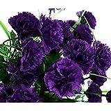 黒人のカーネーションキンググッドカットフラワー&花瓶生命楽しい香りをシード