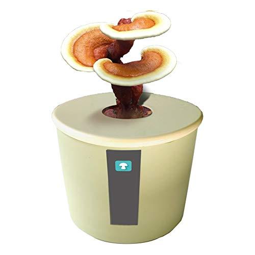 M-TOP Pilzbrut Kräuterseitling, Mushroom Box Pilz-Zuchtset für die Sorte Oyster, Bio Shiitake Pilzzuchtkultur Compact Set für Anfänger