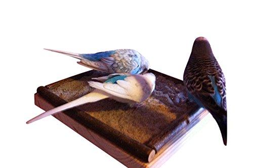 Vogelgaleria Eck Sitzbrett 20x20cm mit Natur Holz Bordüre für Vögel wie Nymphensittich Wellensittich Kanarien etc | Bestes Käfig Zubehör Vogelsitzbrett Sitzbrett inkl. Befestigungsmaterial