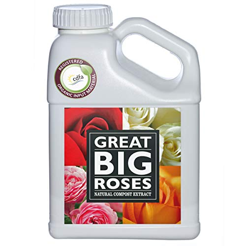 Great Big Roses Food Fertilizer