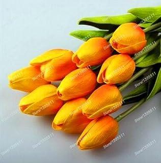 2 bombillas cierto bulbos de tulipán, flor del tulipán, (no tulipán semillas), bulbos de flores, las plantas al aire libre, el crecimiento natural de los bonsai, para el jardín de