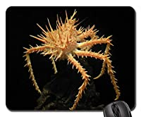 マウスパッド-カニのとげのある甲殻類の食品貝マクロクロー 25x30cm