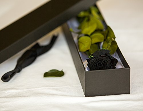 Petals And Roses - Rosa Nera Singola, Con Scatola Rivestita In Seta