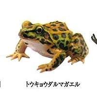 カプセルQミュージアム 日本の動物コレクション3 東京 巨大都市と離島 9:トウキョウダルマガエル 海洋堂 ガチャポン