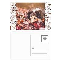 ペットと動物の葉の写真 公式ポストカードセットサンクスカード郵送側20個