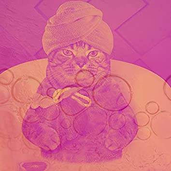 魅惑-子猫