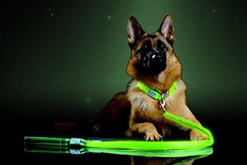Pet Industries Premium LED Reflective Dog Leash