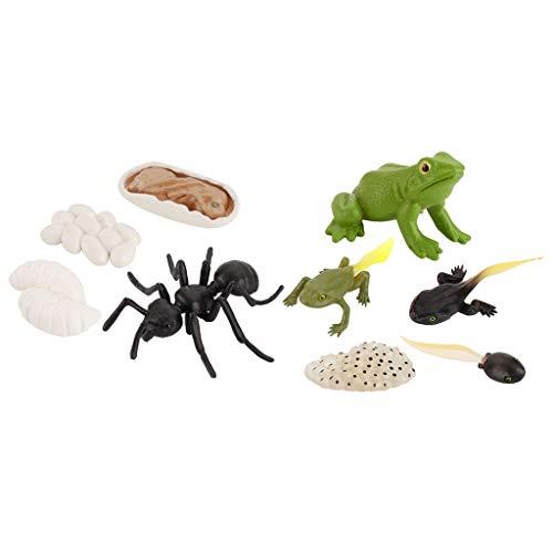perfeclan Nature Aniamls Ciclo de Vida de La de Hormiga Rana Juguetes para Estudiantes de Aprendizaje para Niños