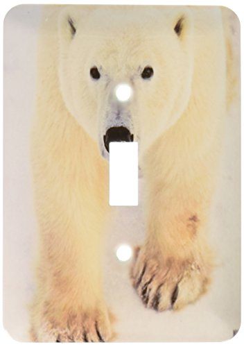 Polar Bear Close-Up Single Toggle Switch - 3dRose lsp_10719_1