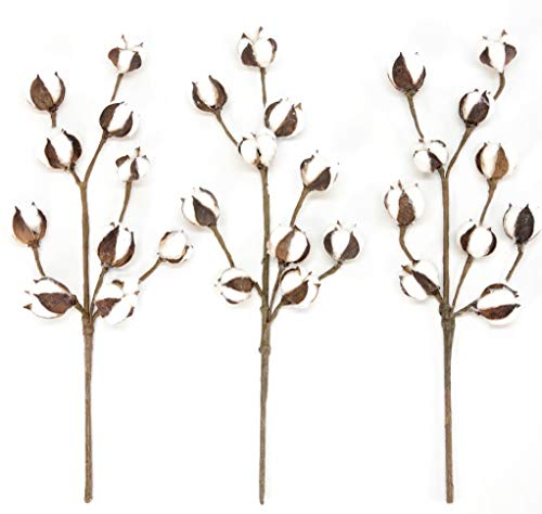 """Cotton Stems - 3 Stems/Pack - 10 Cotton Buds/Stem - 20"""" Tall - Farmhouse Style Floral Display Filler - Wedding Centerpiece by Silvercloud Trading Co."""