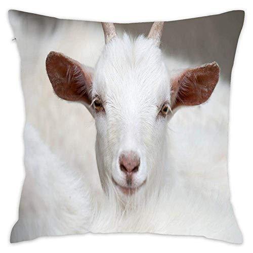 Throw Pillowcase,Premium Cotton Decorative Throw Cushion Cover Animal Throw Pillow Cover White Goat Front View 18 X 18 in