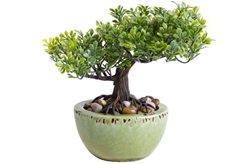 Unbekannt künstlicher Mini Bonsai in grüner ovaler Keramikschale (Ficus-Bonsai)