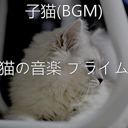 猫の音楽 プライム
