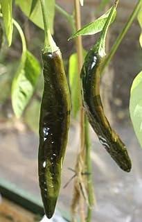 Chili Pasilla Bajio - Chili - 10 Samen