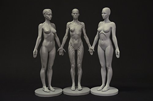 Female Anatomy Figure Collection: Planar, Ecorche and Skin - Anatomical Reference for Artists 女性の解剖学フィギュアコレクション:平面、剥皮した人体模型とスキン - アーティストのための解剖学的リファレンス