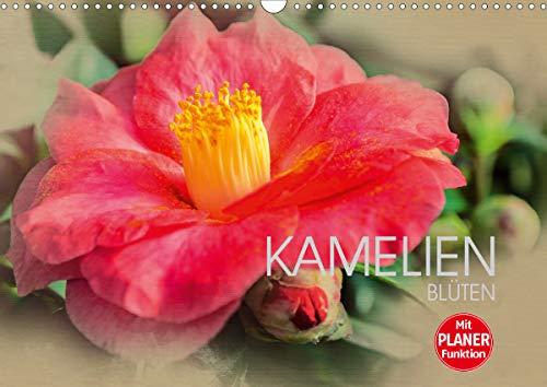 Kamelien Blüten (Wandkalender 2021 DIN A3 quer)