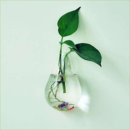 Waterdrop Shape Glass Wall Hanging Flower Vase Plant Bottle Home Decor
