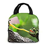Bolsa de almuerzo con aislamiento Bolsa fresca para cajas de almuerzo Tela impermeable Bolso de picnic plegable para mujeres Hombres adultos Niños Gato Caminando hierba-11