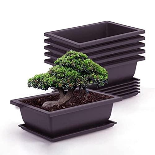 Atlnso 6 Stück Bonsai-Trainingstöpfe mit Tablett Blumentopf aus Kunststof Quadratischer Sukkulente Topfpflanzen Pflanztopf für Garten,Wohnzimmer und Büro