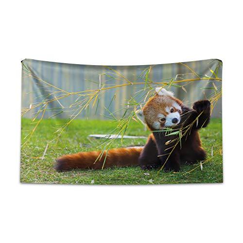 ABAKUHAUS Tierwelt Wandteppich & Tagesdecke, Panda aus Weiches Mikrofaser Stoff Waschbar ohne Verblassen Digitaldruck, 230 x 140 cm, Braun Rot