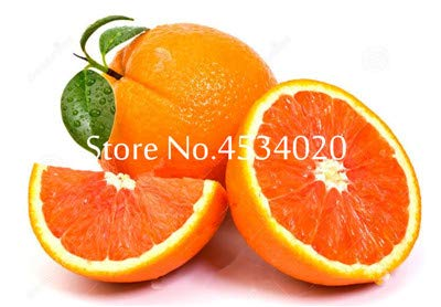 Hot Sale! 50st Citrus planten Bonsais Mandarijn bonsai Eetbare planten Fruit Bonsaiboom Healthy Food Home Garden gemakkelijk te kweken: 7