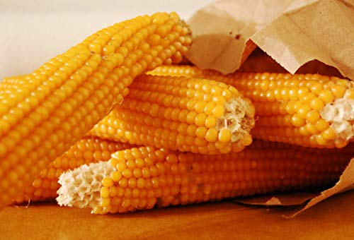 Purchase Toyensnow - Corn, Popcorn, Yellow, pop Corn (81 Seeds)