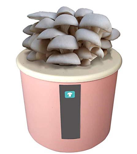 LSSB Ecológicas Hortícolas, Caja de Cultivo Casero de Setas Ostra, Kit Autocultivo Champiñon, Crece en 15-25 dias, Guía Básica de Cultivo Personal, Recreacionalblue-White Oyster Mushroom