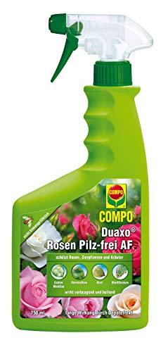 Compo Duaxo Rosen Pilz-Frei AF - Fungicida contra hongos, 750 ml, cont