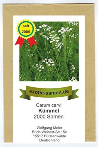 Kümmel - Carum carvi - 2000 Samen