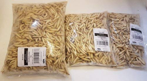 Bienenmaden Wachsmottenlarven gefroren 250g 500g 1000g 250 g 500 g 1 kg | Pinkies Aufzuchtfutter z.b für Schwalben Mauersegler (500g)
