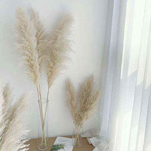 pah-macy Pampasgras, natürlich getrocknet - Plant Wedding Flower Bunch for Home Decorations vom Hochzeitstrend zum Interior-Liebling! (Naturfarben)-Primärrohr 10_Trockene Zweige
