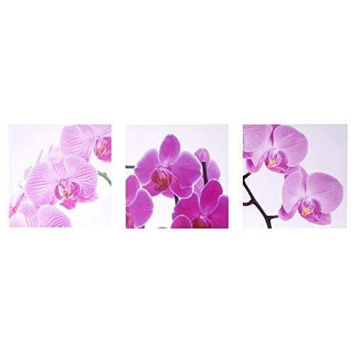 Mendler Leinwandbild T376, Wandbild Keilrahmenbild Kunstdruck, 3-teilig 150x50cm - Orchidee