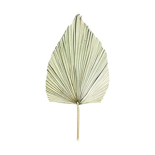 ZRNG 1 PC Hojas de Palma Seca Fan de PU Natural Duradero Bricolaje Ornamento de Arte decoración de Pared fotografía Accesorios Aptos for la Fiesta de Bodas (Color : As Shown)