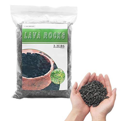 CARURBODY Black Lava Rocks for Indoor Plants-Perfect Mini Lava Stone Top Dressing for Bonsai Orchid,Cacti Succulents-100% No Artificial Colors Pure Volcanic Rock 2.2LBS