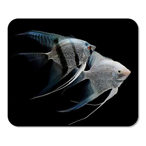 Mousepad Computer Notepad Büro Silber Engelsfisch Engel Fisch Süßwasser Aquarium Schwarz Skalar Tier Heimschule Spiel Spieler 25 * 30Cm