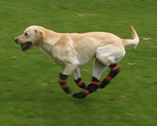 Pro-Active Paws Double-sided Dog Boots Designed for Disabled