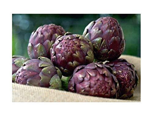Artischocken Violet de Provance - Cynara scolymus - 10 Samen