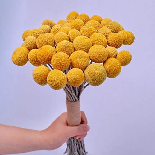 TooGet Natural Craspedia Flores secas Amarillo Billy Botones Bolas Ramo de Ramo, Real recién cosechado seco Ramo de Plantas arreglos Decorados para Home Crafts, Fiesta, Boda, Tienda