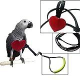 POPETPOP arnés para pájaros - Correa de Loro Correa de pájaro Ajustable Loro Mascotas Cuerda de Entrenamiento de Vuelo al Aire Libre para pequeñas Aves Medianas - Talla XS